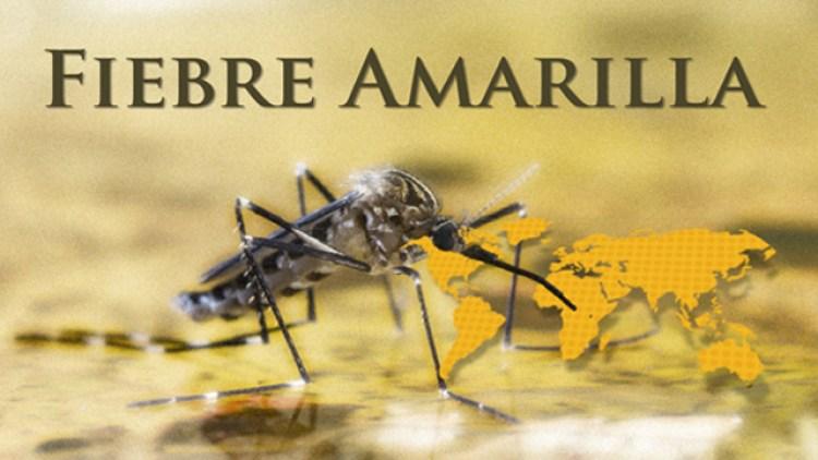 Medicos del mundo alerta: fiebre amarilla podría reintroducirse en la región, junto a dengue y zika